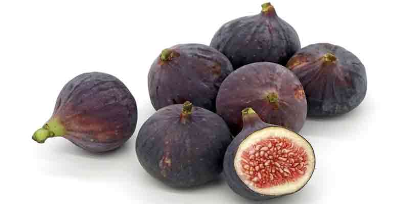 Can Guinea Pigs Eat Figs