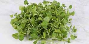 can guinea pigs eat watercress